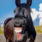 6 מצבים בהם הומור שחור הוא התרופה