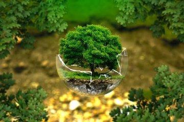 איך לשמור על איכות הסביבה והניקיון